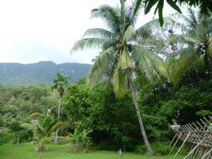 Borneo Aktual-033-1024x768