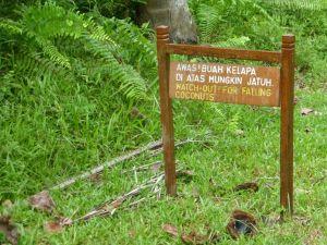Borneo Aktual-021-1024x768