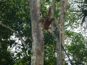 Borneo Aktual-047-1024x768