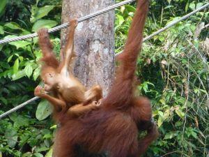 Borneo Aktual-052-1024x768