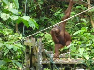 Borneo Aktual-053-1024x768