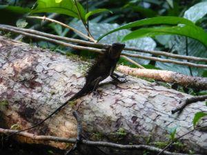 Borneo Aktual-104-1024x768